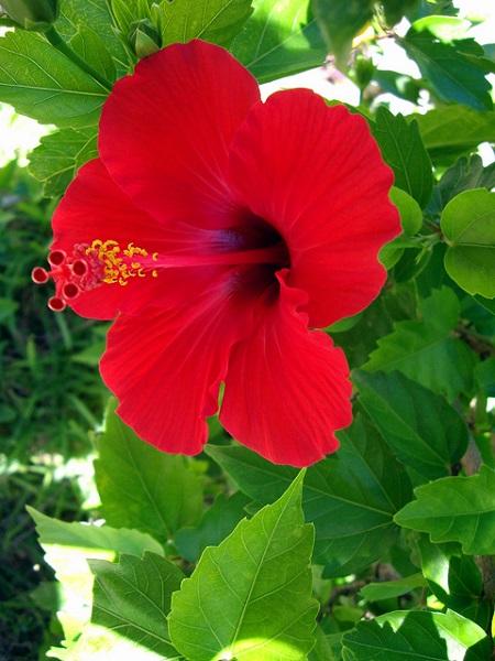 選び方成分植物エキスハイビスカス